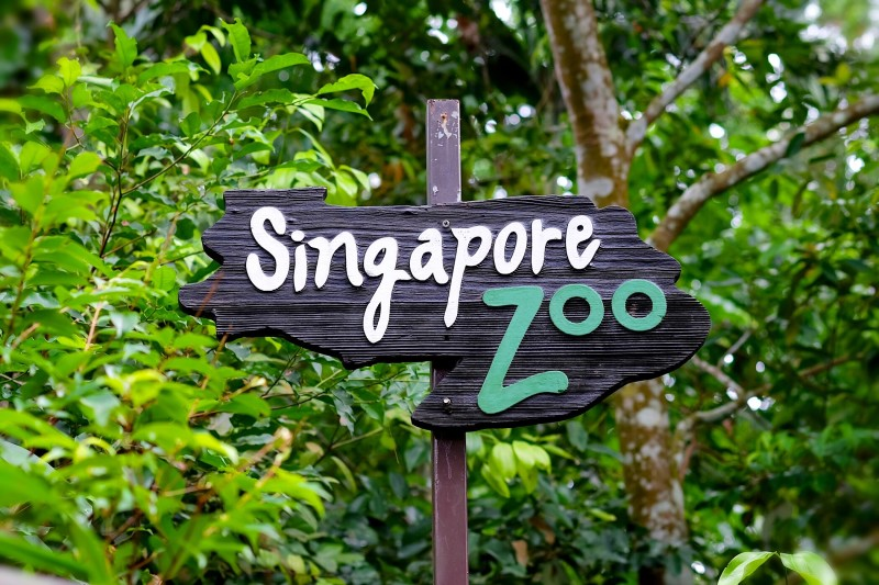 singapore zoo Let kids learn and play at kidzworld where they can enjoy pony rides, meet farm animals and have a splashing good time.
