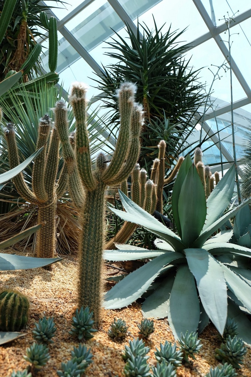 Gardens by the Bay – Flower Dome — Singapore