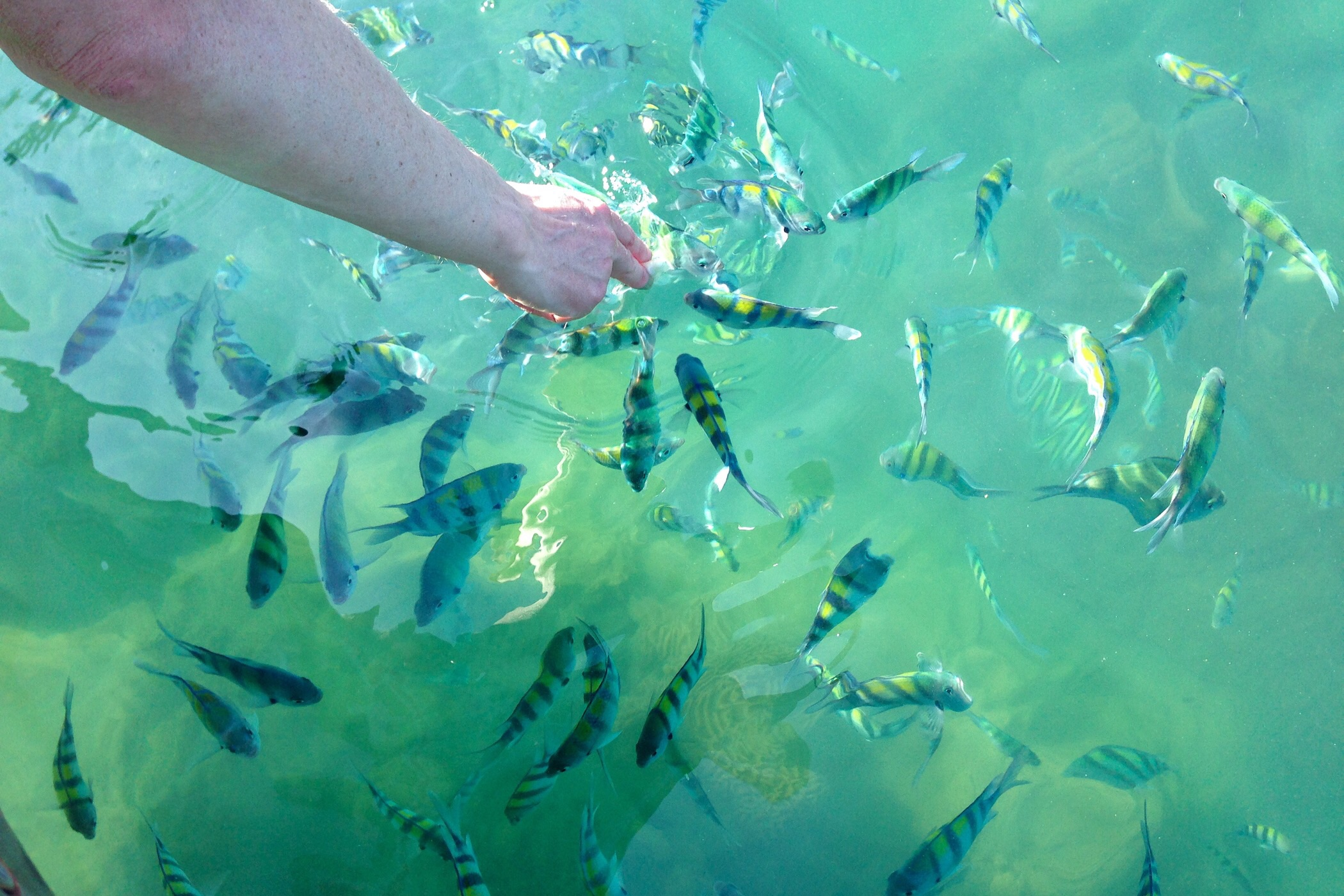 Feeding the Coral fishes — Langkawi