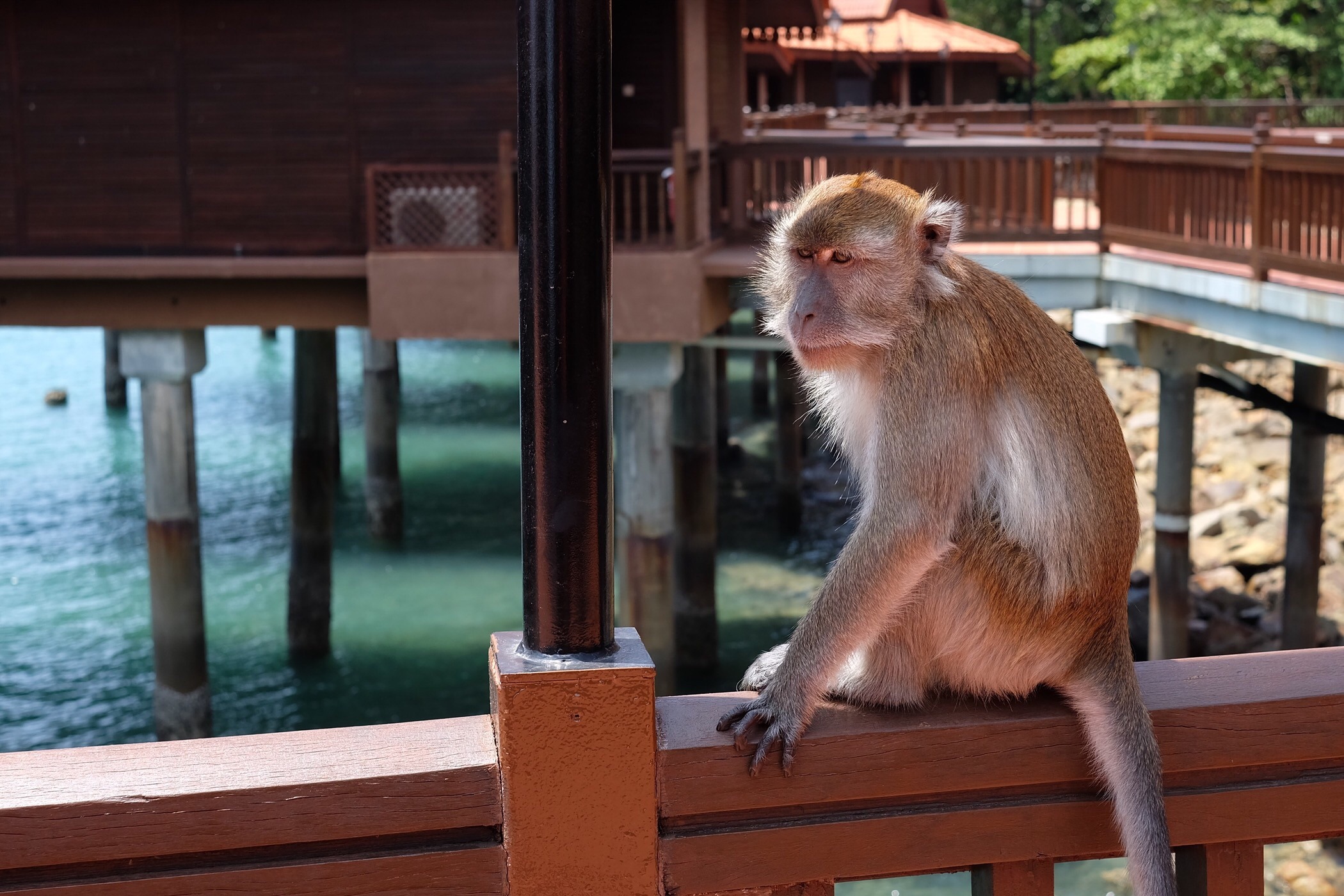 A visitor to our resort — Langkawi