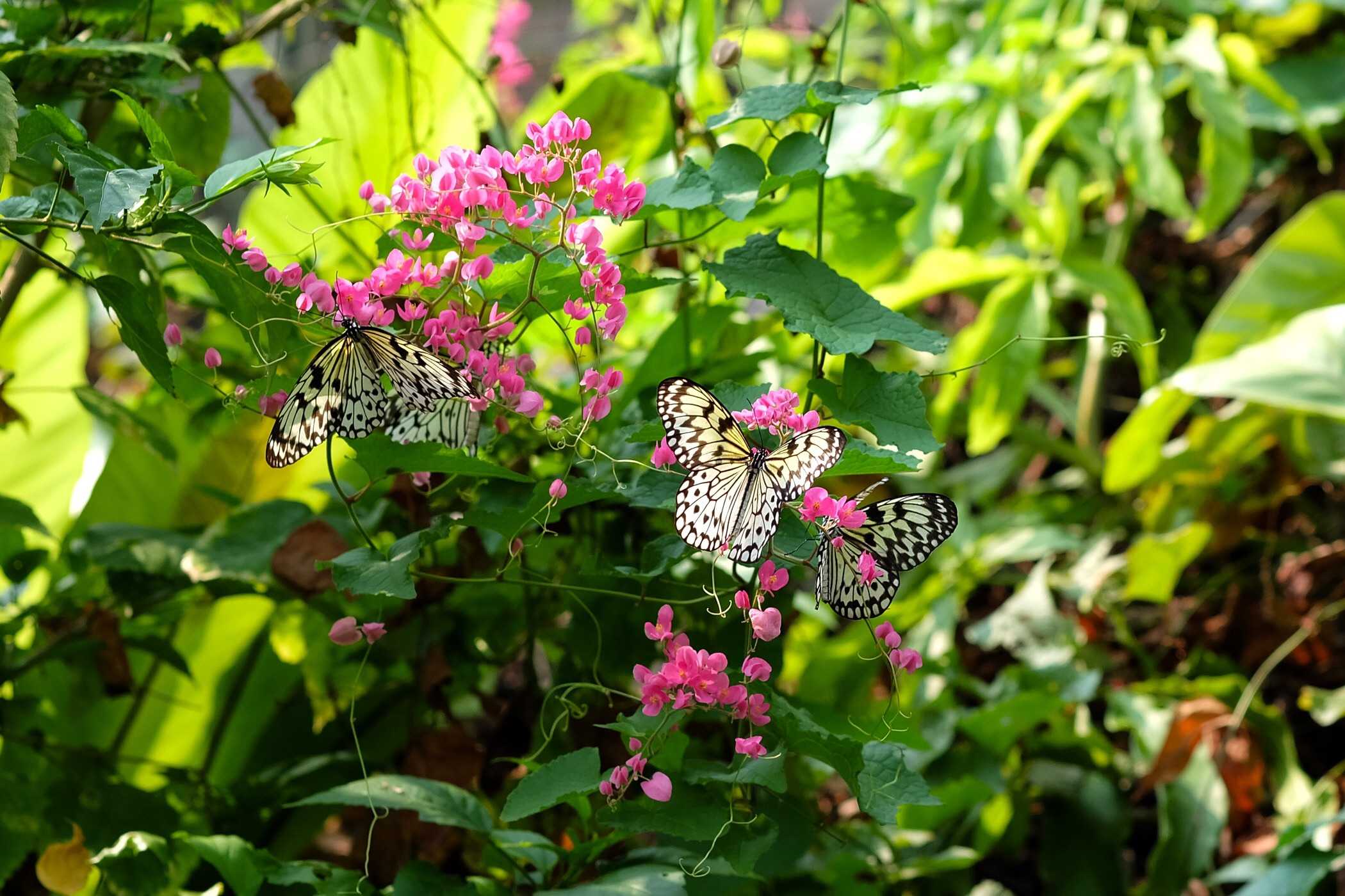 Butterfly and insect house — Sentosa, Singapore
